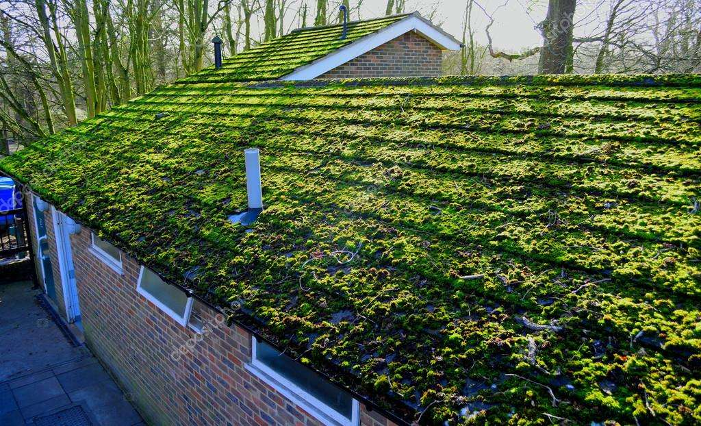 Should I Be Worried About Moss On My Roof Nu Look Home Design