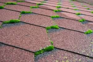 Does a roof with moss need to be replaced